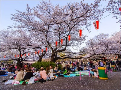 เทศกาลฮานามิ (Hanami Festival)