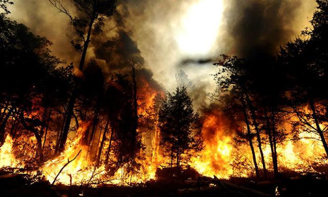 Kebakaran Hutan Sangat Berbahaya bagi Kesehatan Pernapasan