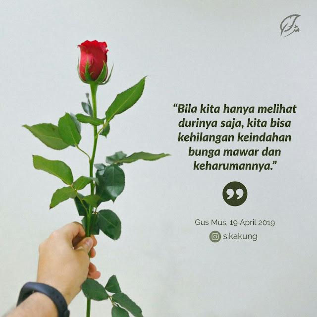 Gambar duri dan mawar