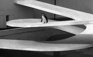Black and White Photo of the Modernist Penguin Pool at London Zoo