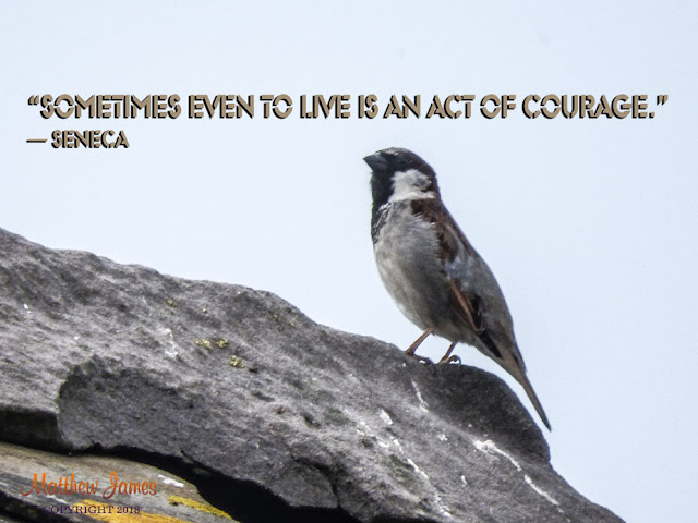 """Sometimes even to live is an act of courage."" ― Seneca"