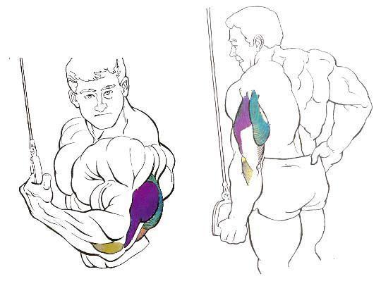 triceps inverso polea alta