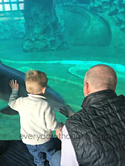 Georgia Aquarium Dolphins
