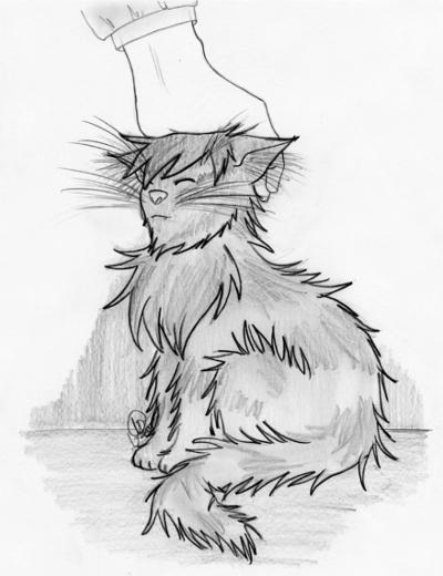 Katze wird gestreichelt