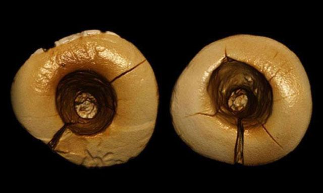 dokter-gigi-kuno