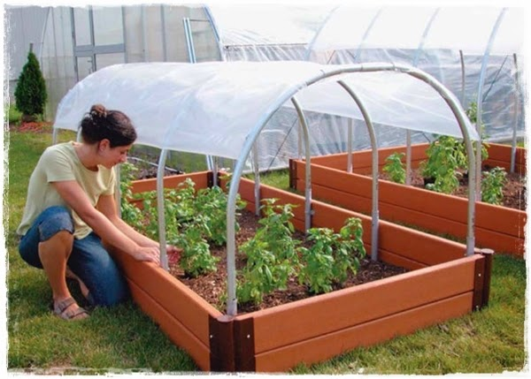"<img src=""mini greenhouse.jpg"" alt=""mini green house"">"