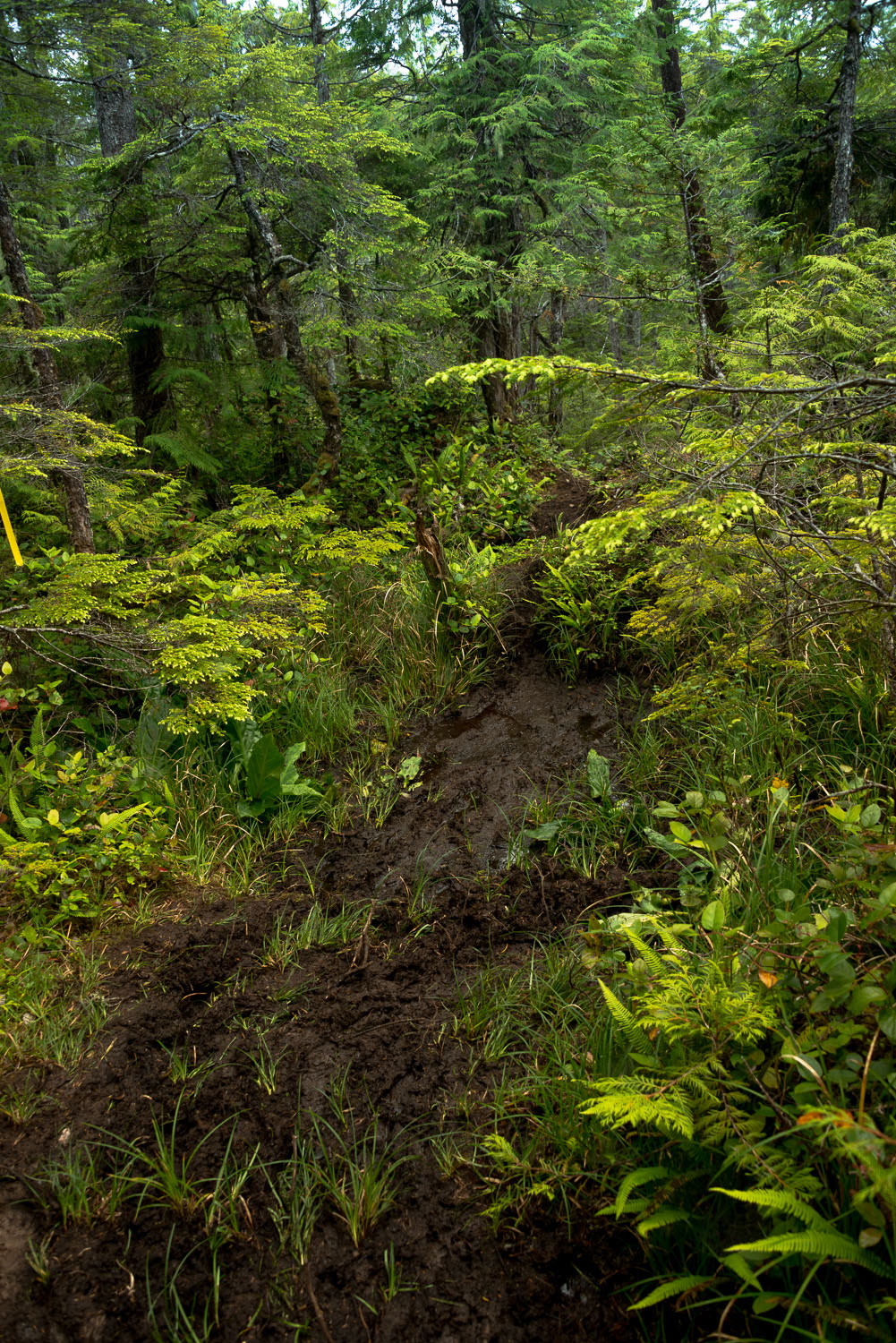 Sometimes you can experience mud on the North Coast Trail