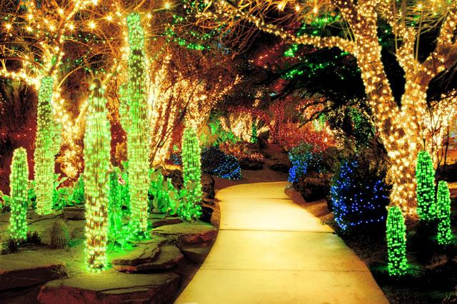 christmas tree cactus garden - photo #10