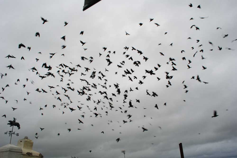 The Day is Full of Birds