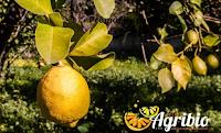 Logo Puoi vincere gratis una cassetta da 20 kg. di Agrumi Biologici Siciliani