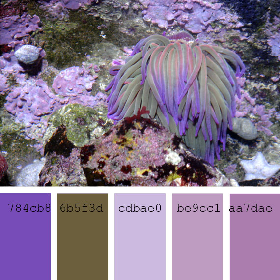 Pantone color of the day Lupine violet