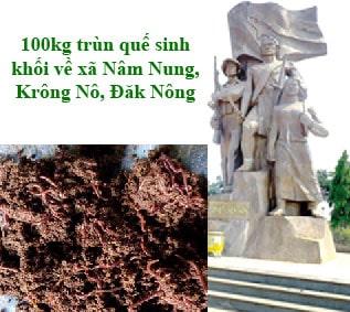 Trùn quế Nâm Nung, Krông Nô