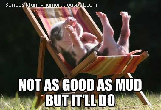 Pig says: Not as good as mud, but it'll do