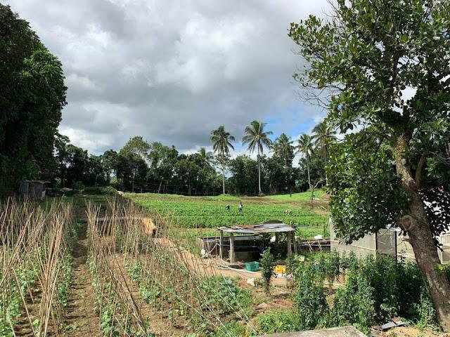 rodem farm and garden restaurant
