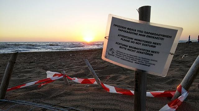 Δυναμικά η Πελοπόννησος στο χάρτη προστασίας της θαλάσσιας χελώνας!