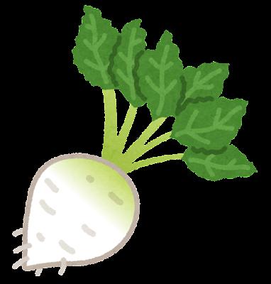 テンサイのイラスト(野菜)