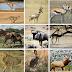 10 fastest land animals.