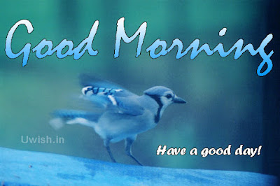 good-morning-wishes-brid-image-have-a-good-day-with-love-quotes