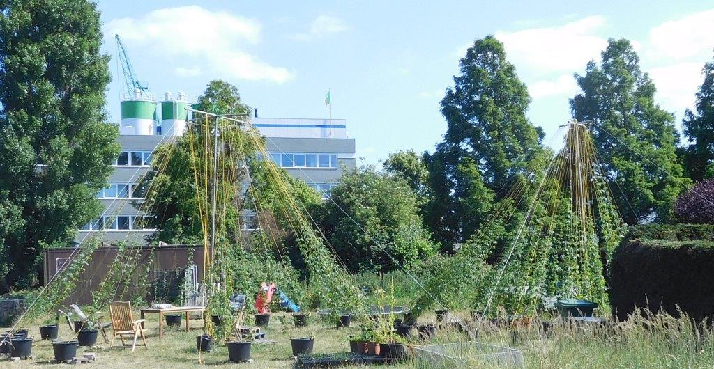 Afbeeldingsresultaat voor hop binckhorst