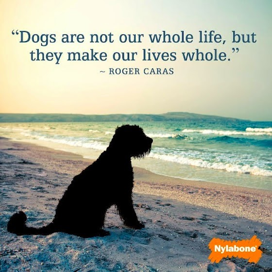 Inspirational Pet Quotes: Dogs Are Not Our Whole Life, But They Make Our Lives Whole