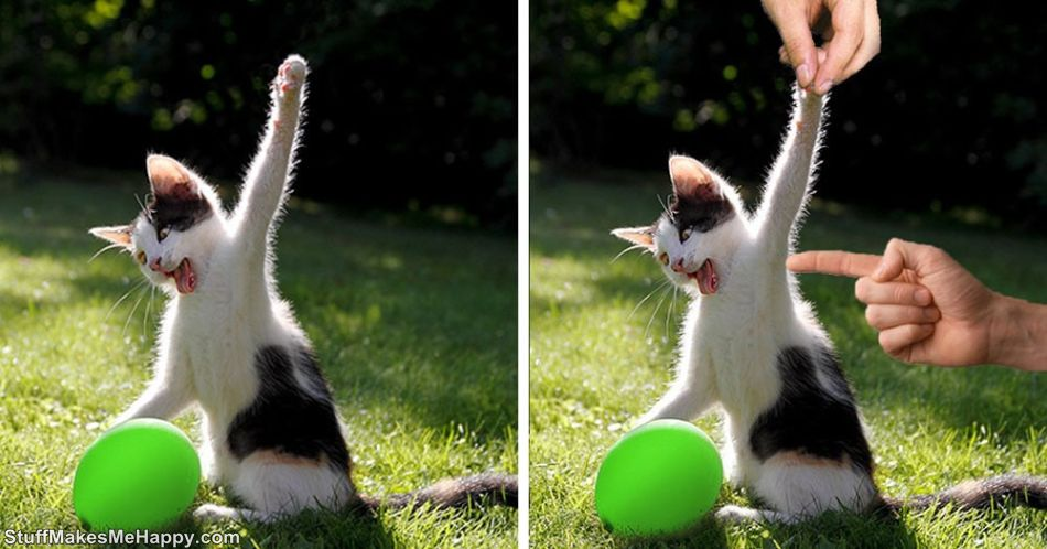 Best Photoshop Battles: The Fierce Battle between the Cat and the Balloon