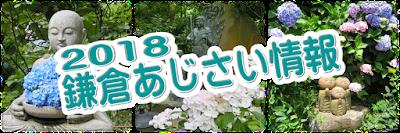 2018鎌倉あじさい情報