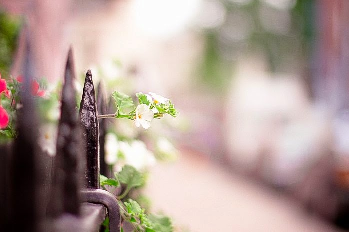 Thời khắc cuối cùng của mùa xuân