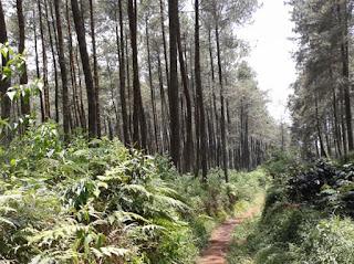 Hutan Jayagiri Lembang | Surga Para Pecinta Alam