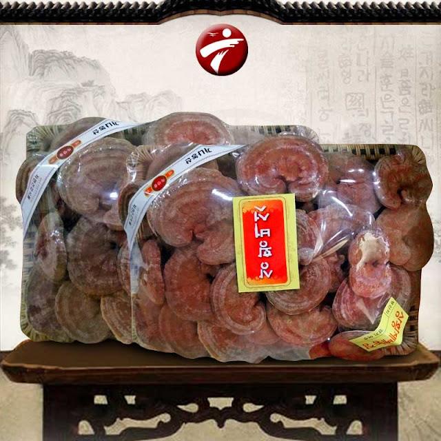 nấm linh chi đỏ hà nội