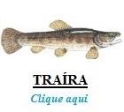 Peixe, Traíra