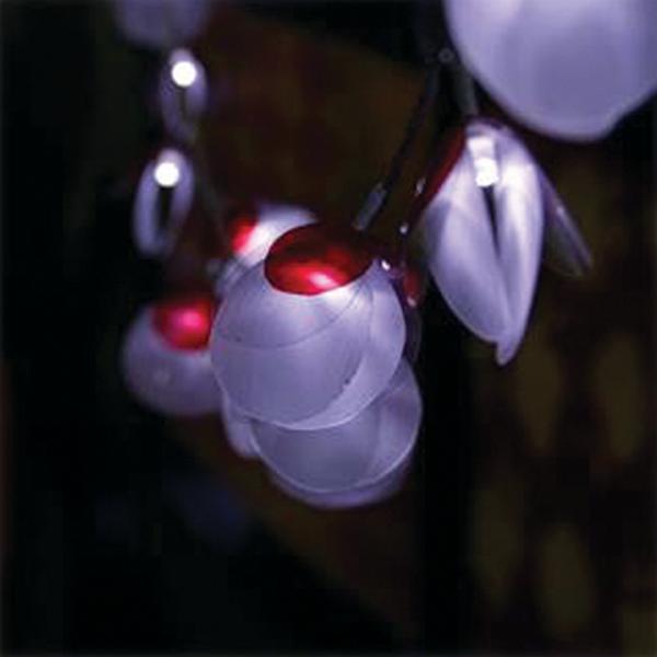 Cordão de LED Concha - 50 LEDs - 2,5mt (N0037)