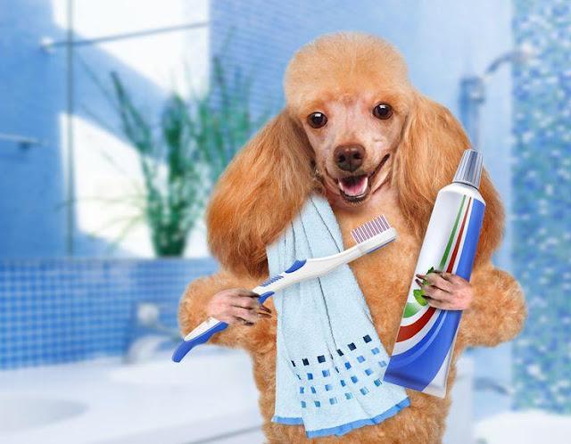 Đánh răng cho chó