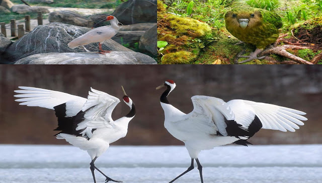 3 Jenis Burung Terlangka Didunia