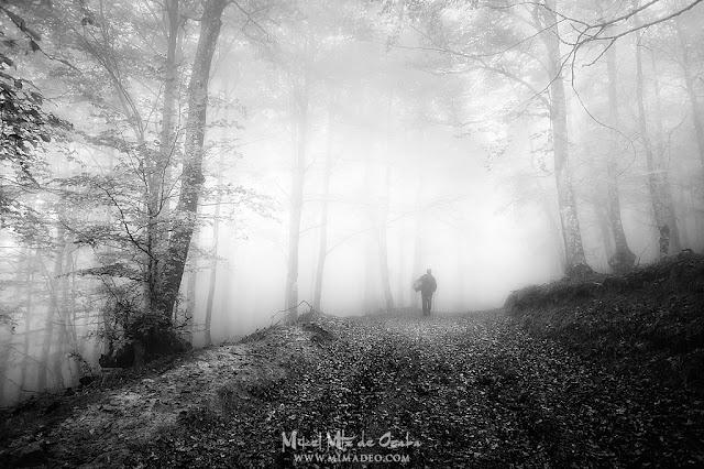 Setero en el bosque