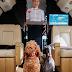 Με λιχουδιές από βραβευμένο σεφ: Αεροπορική εταιρεία εφαρμόζει νέο πρόγραμμα για τα κατοικίδια που ταξιδεύουν