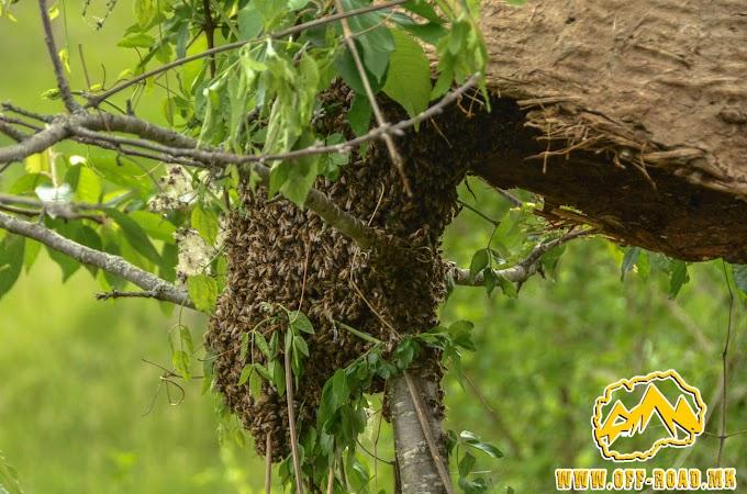 Фаќање на рој пчели – 24.05.2019