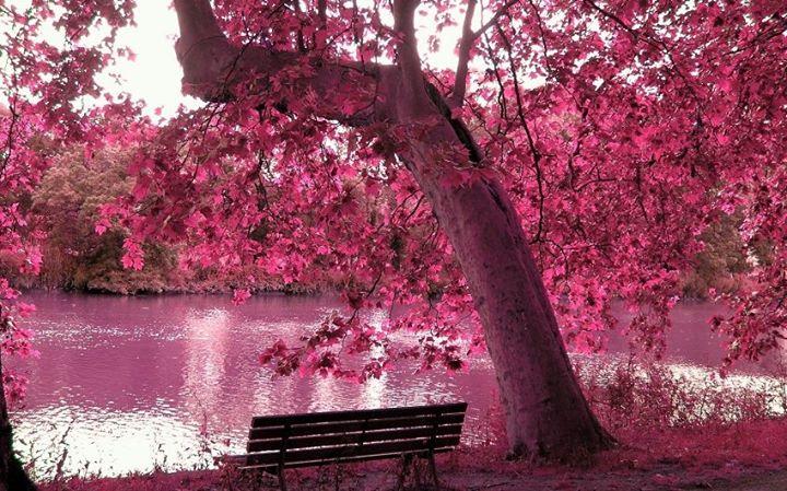 göl kenarı ağaçların içinde açan çiçek manzara resimleri
