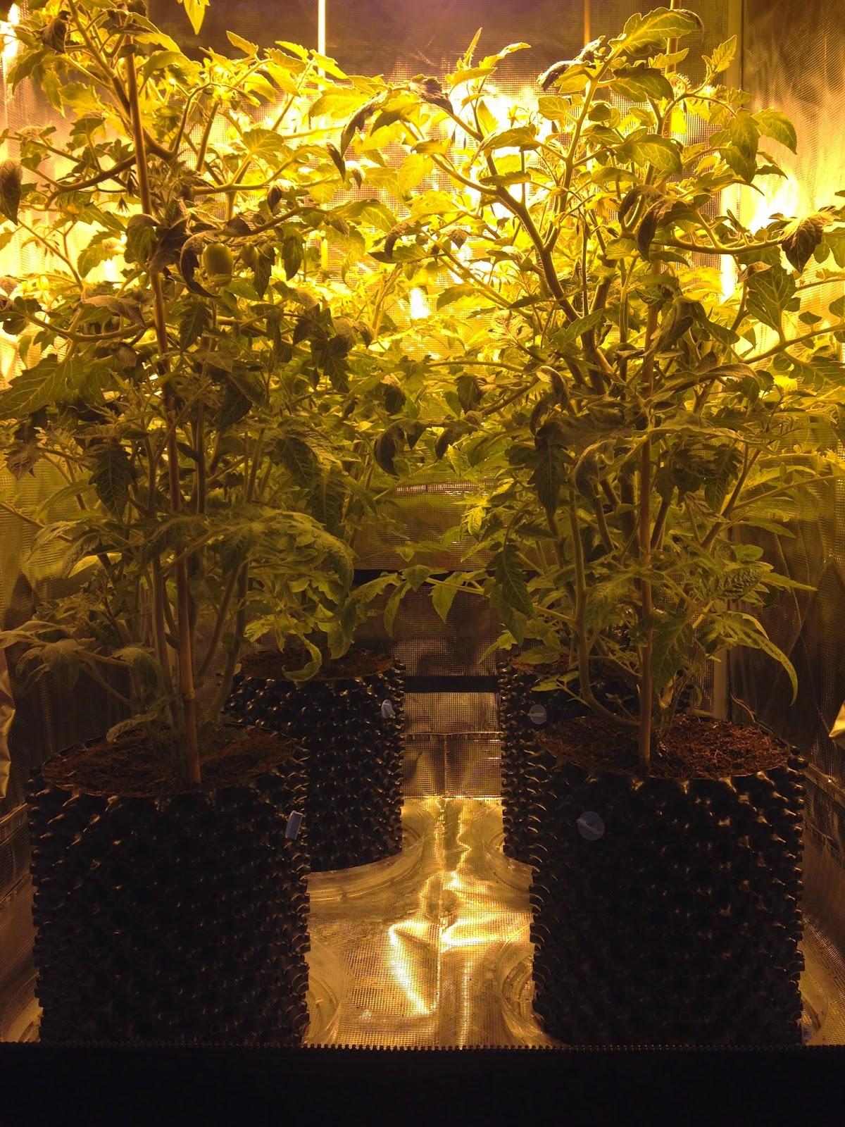 The Grow Room Special Premium 3 X3 Grow Tent Set Up
