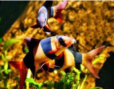 Jenis-Jenis Ikan Hias Yang Menjadi Favorit Luar Negri