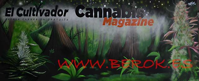 Graffiti mural para el Cultivador y Cannabis Magazine