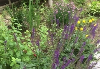 Summer garden with purple flowers