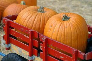 Pumpkin Sauce For Pasta Fall Recipe
