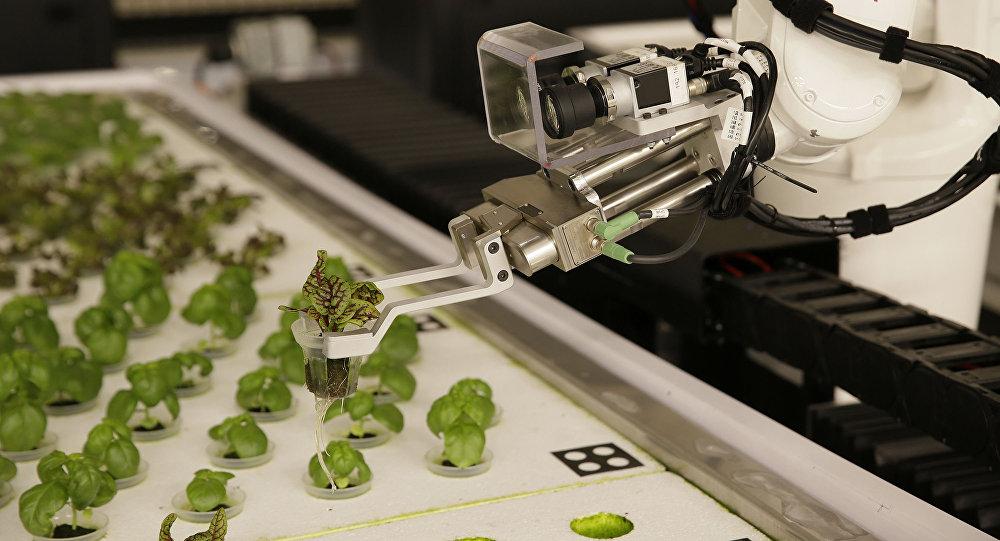 Αυτά είναι τα πρώτα λαχανικά που καλλιεργούνται από ρομπότ (Βίντεο)