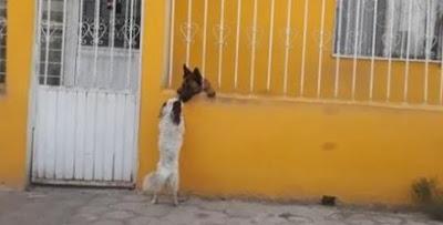 Un video que muestra la amistad entre perros se hace viral