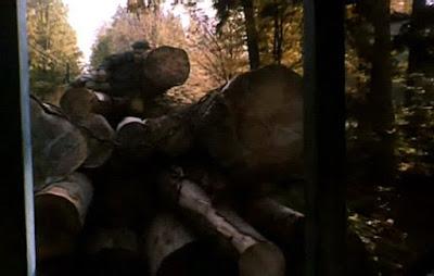 waskotorowka kolej leśna puszczy białowieskiej