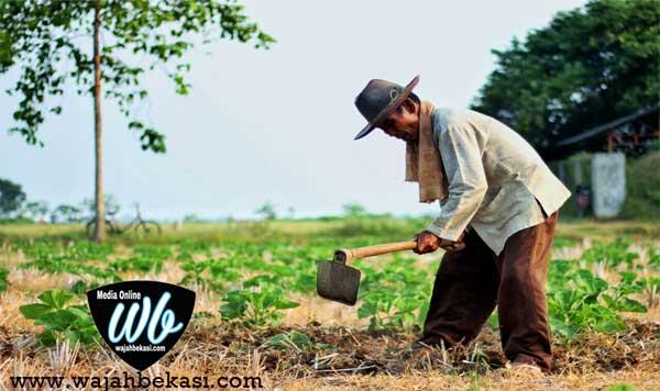 Nasib Petani Bekasi Yang Semakin Tersingkirkan