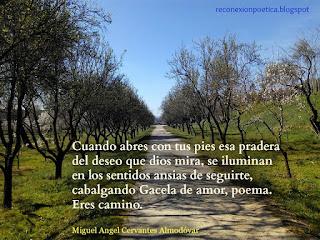 blogdeescritura-escritura-miguel-angel-cervantes-camino