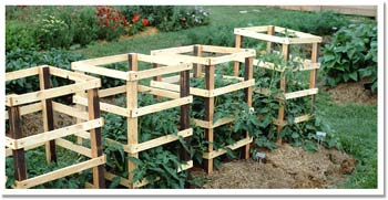 Idaho Wood Tomato Cages Need Tomato Cages This Year Ill Build