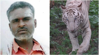 India's Bannerghatta Biological Park Zoo caretaker mauled to death by White Tiger.