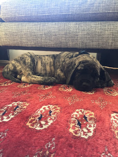 puppy asleep on a patterned rug